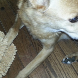 An Easy Way To Clean Dirty Dog Paws - Simply Good Tips